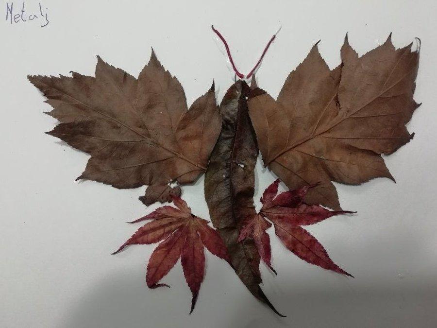 zala-metulj-iz-listja